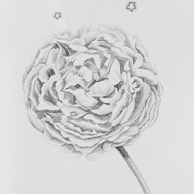 장미 속의 큰왕자 (The Big Prince in the Rose) 42.5x32cm, pencil on paper,2018