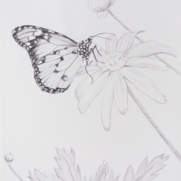 나비와 꽃 (Butterfly and on the Flower) 42.5x32cm, pencil on paper,2018