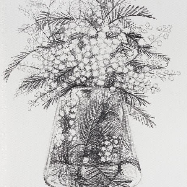 미모사 (Mimosa) 42.5x32cm, pencil on paper,2018