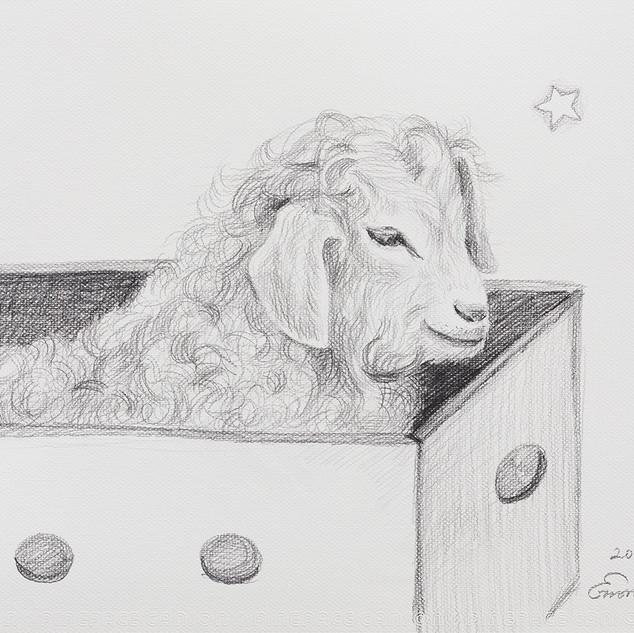 상자 속의 양 (The Sheep in the Box) 42.5x32cm, pencil on paper,2018