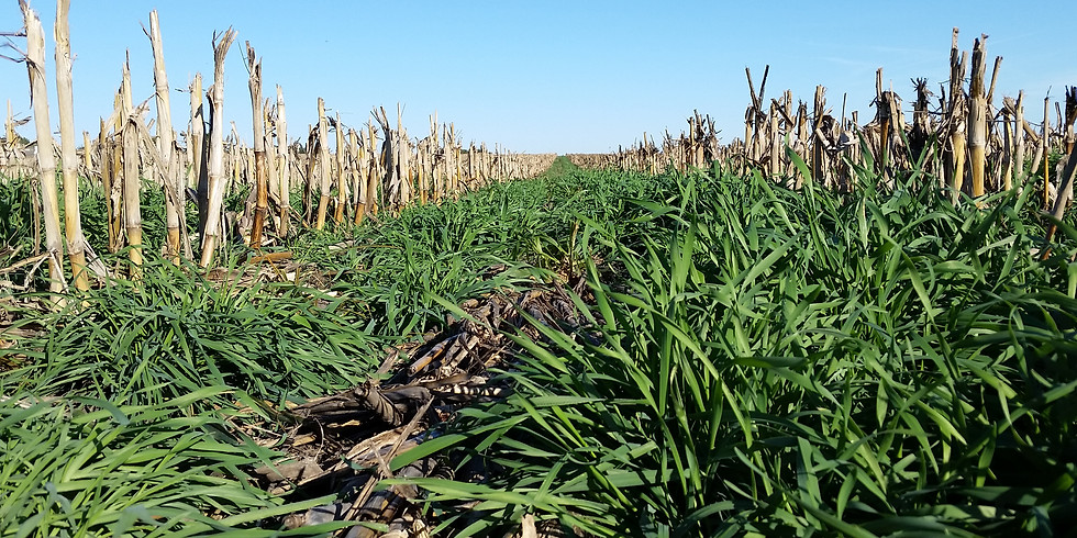 Cover Crops & Soil Health Field Day
