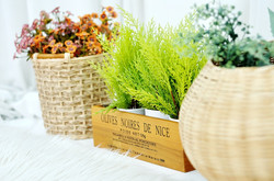 potted-plant-939743_960_720
