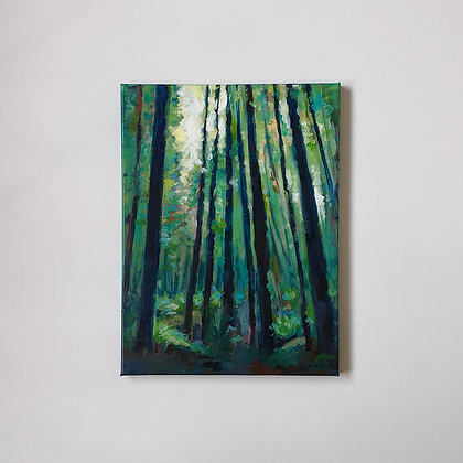 A walk in the redwood forest _ 30x40cm