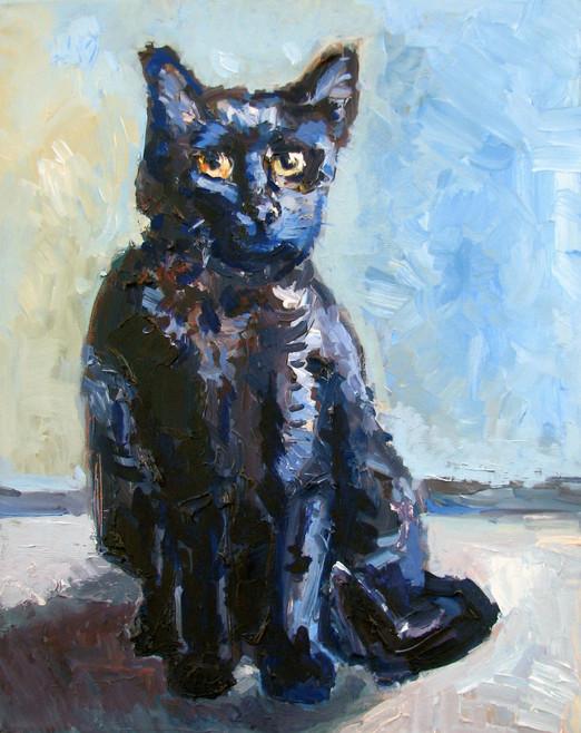 Bodoni the Cat