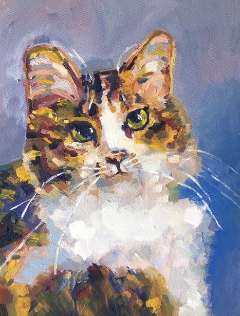 Pet Portrait, Alibi the Cat