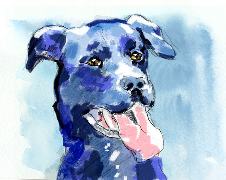 Jake the Labrador Dog