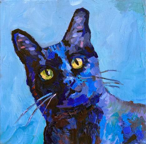 Bodoni the Cat II