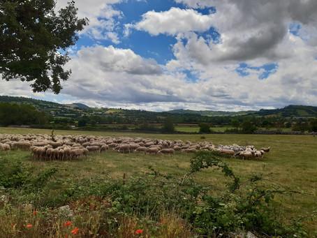Recos du jour de l'Aveyron à la Lozère