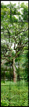 Ash Tree Widewell