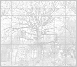 l_arbre_merveilleux_bn_edited_edited
