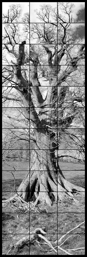 Oak Dartington
