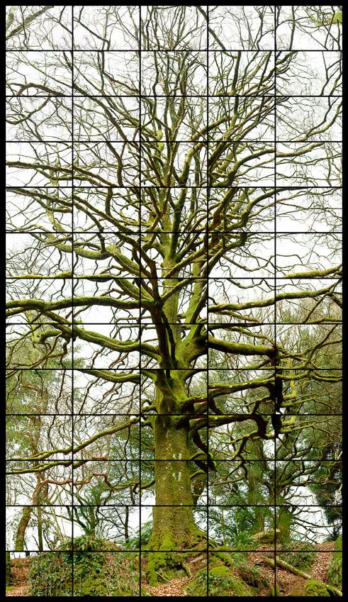 l'arbre merveilleux