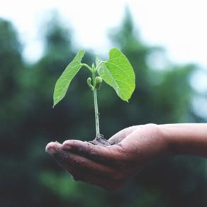 Words as Seeds