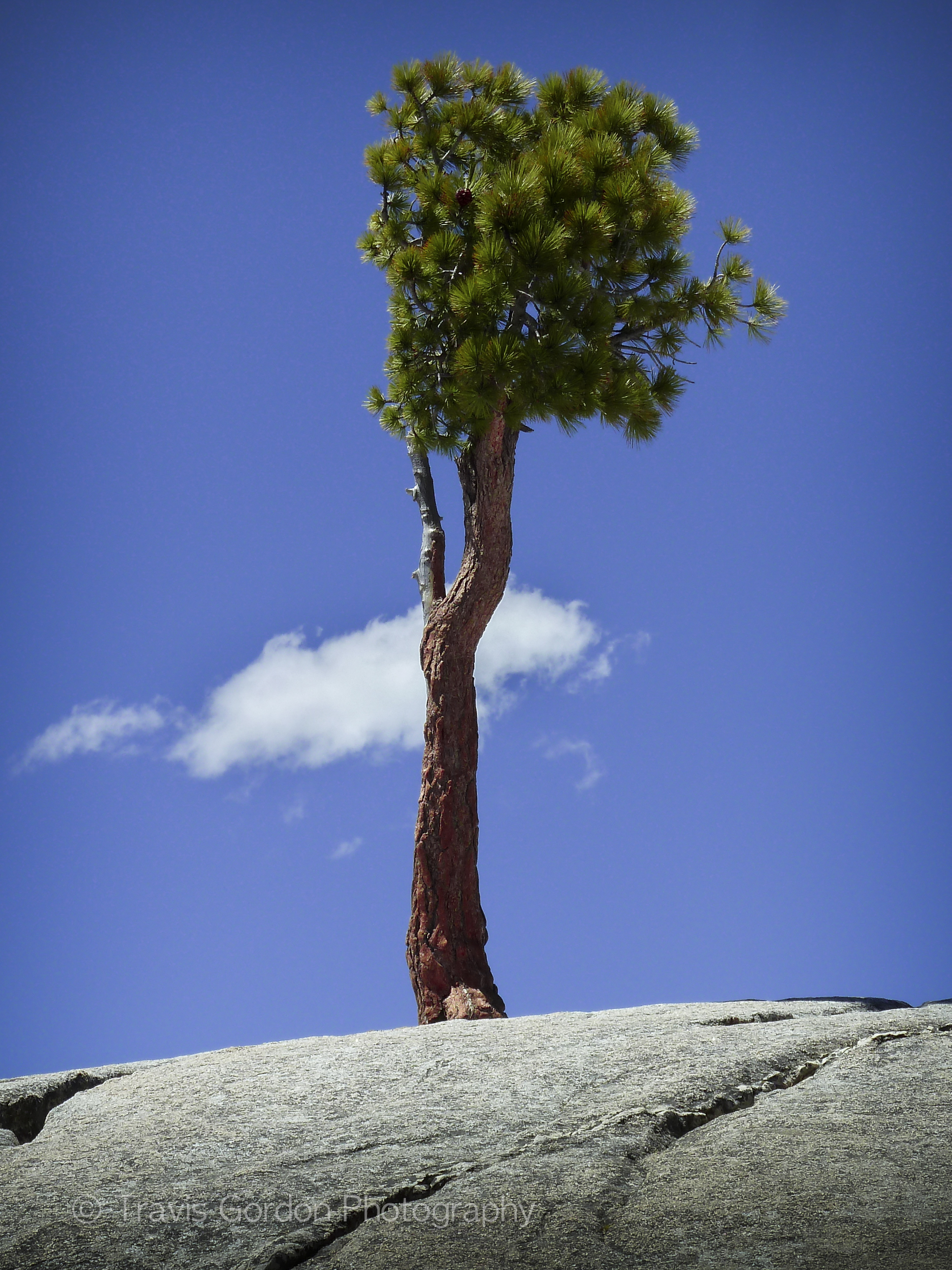 Lone Cloud and Tree