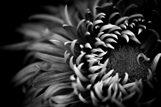 Fleur No 2
