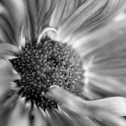 Fleur No.1