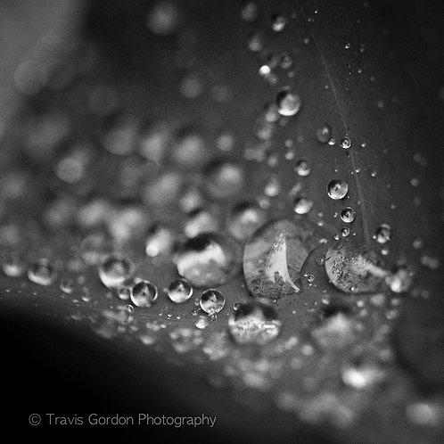 Copper Plant Raindrops