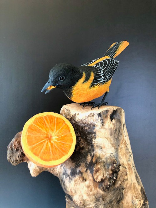 """Baltimore Oriole """"Springtime Splender"""" Museum Quality Artwork."""