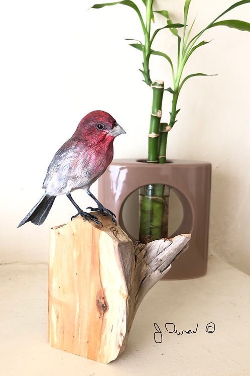 House Finch- Order Only