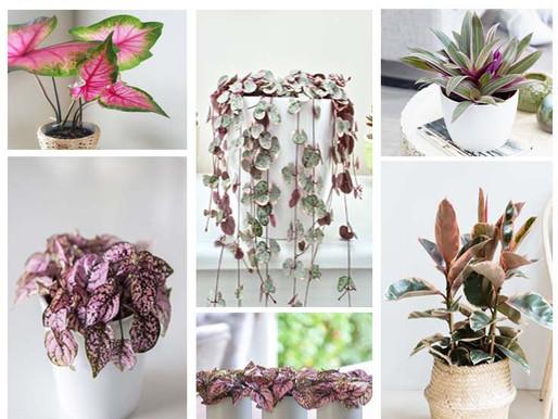 Des plantes vertes qui vous montre la vie en rose