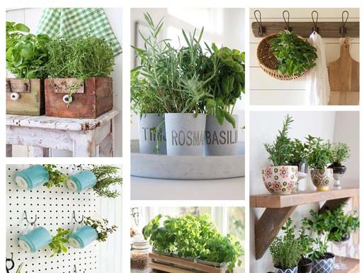 Décorer avec des plantes aromatiques