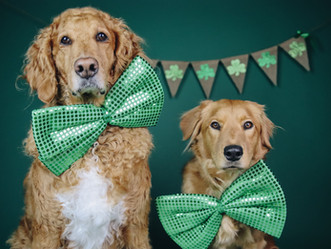 St. Patrick's Day Minis