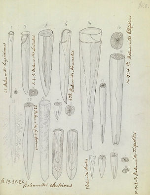 mary-anning-sketches-two-column.jpg.thum