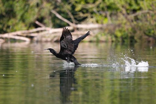 Mirjam-Leutwiler-Wildlife-4.jpg
