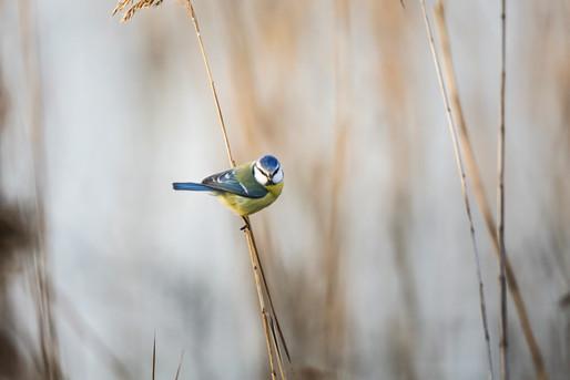 Mirjam-Leutwiler-Wildlife-12.jpg