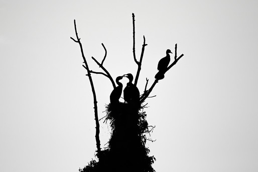 Mirjam-Leutwiler-Wildlife-9.jpg