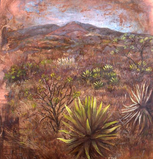 Desierto en Oaxaca