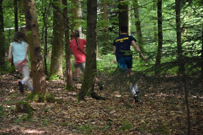 Wald plausch