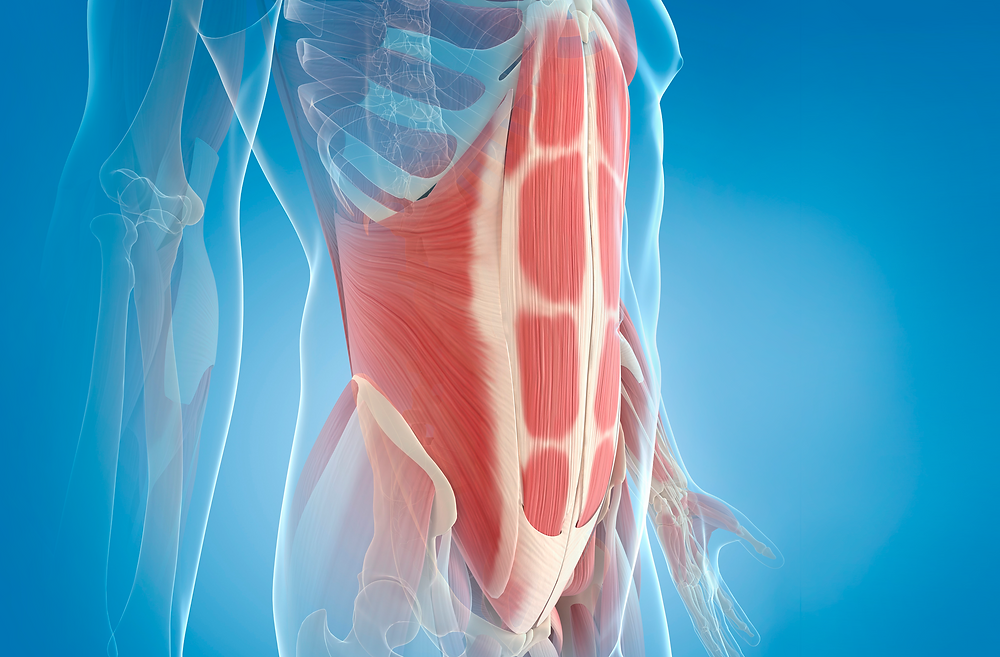 Your abdominal muscles play an important role in vital organ-protection.