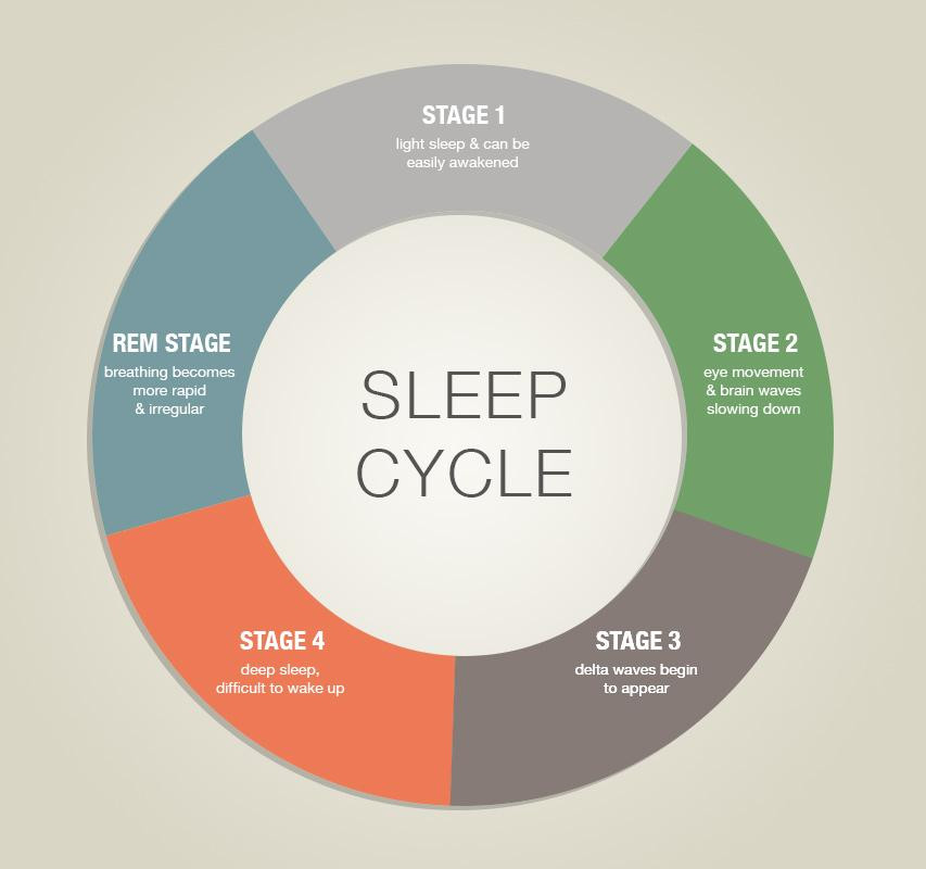 The sleep cycle is made up of 5 stages that takes 90 minutes to complete.