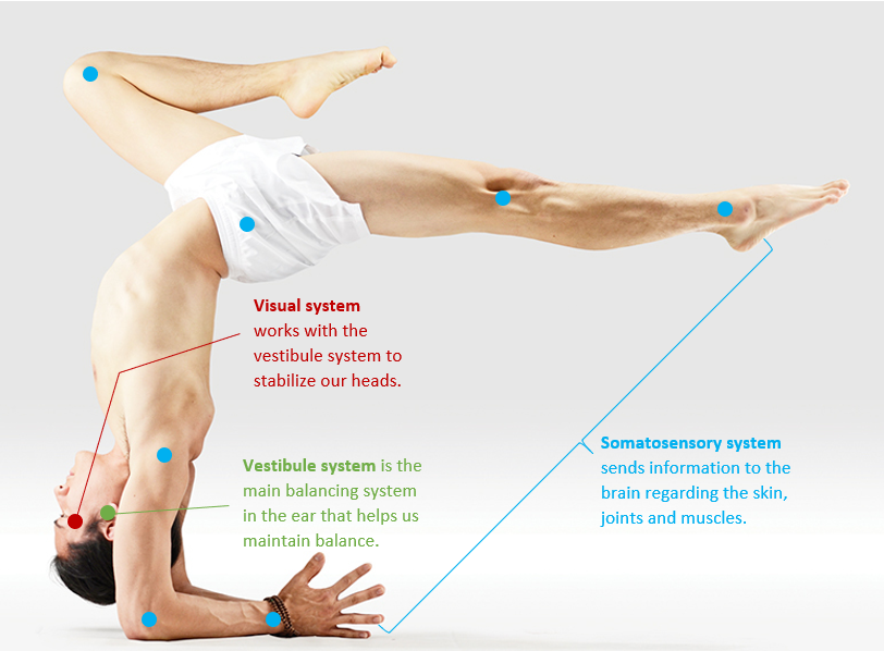 Having good control over the three main sensory systems allow us to create such poses.