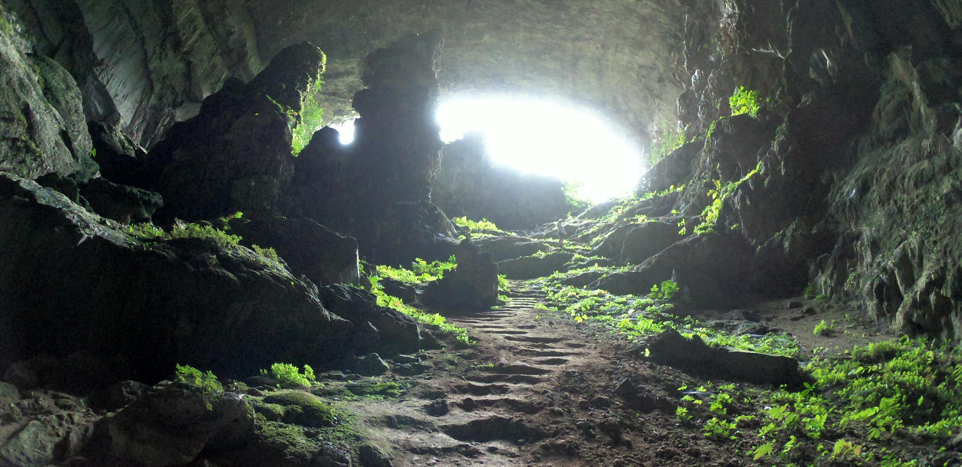 Dơi Cave