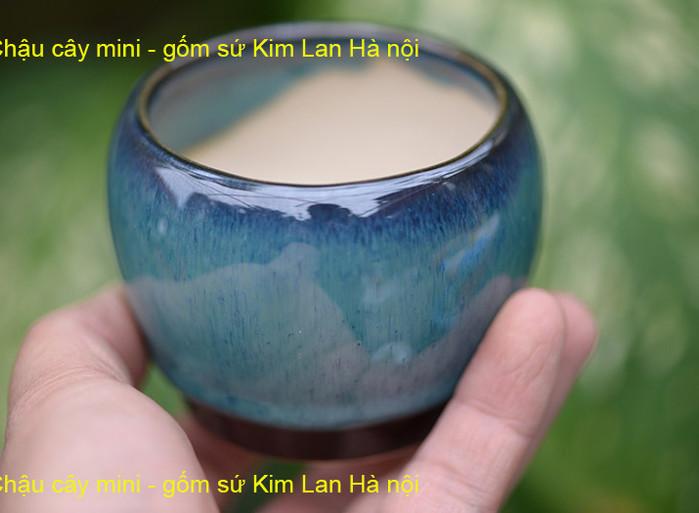chậu-cây-bonsai-mini.jpg