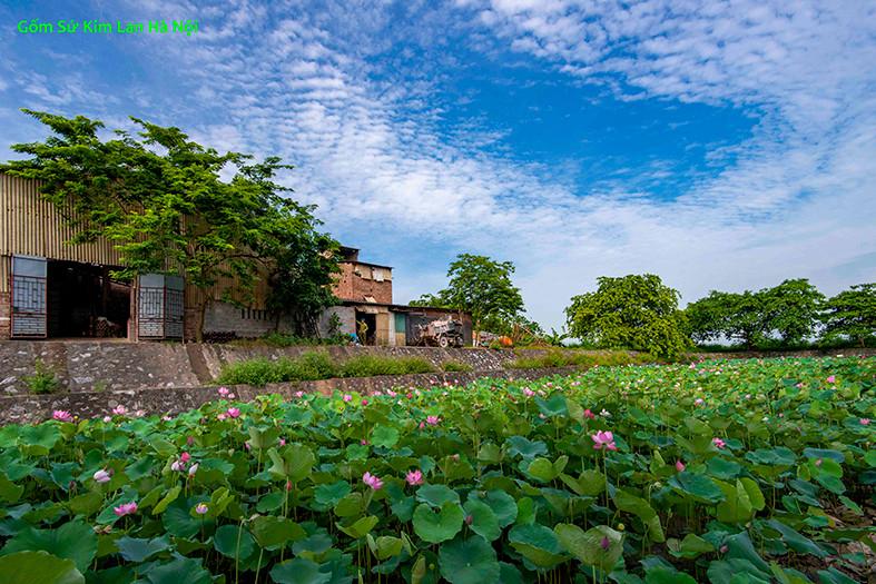hồ-sen-làng-gốm-kim-lan.jpg