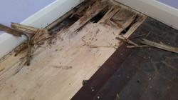 floorboards-under carpet
