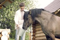 Конь Вятской породы