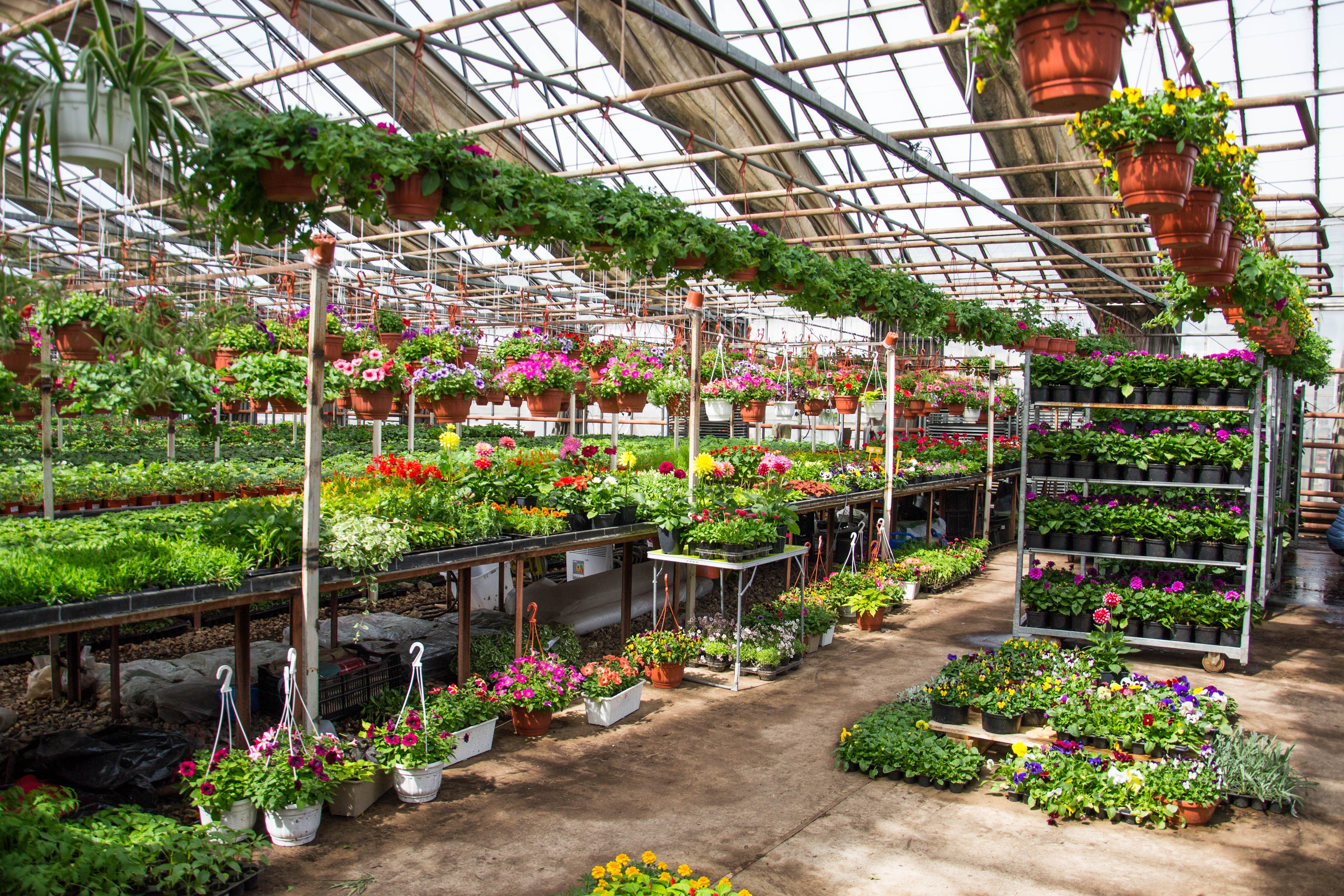 Москва оранжереи купить цветы оптом