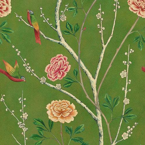 Wild Rosa Chinensis - Olive Grove