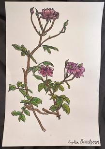 In Watercolor