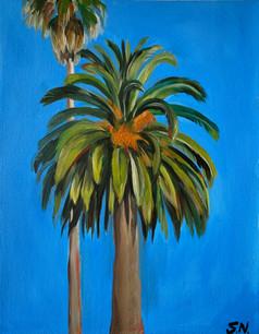Portrait of a Palm
