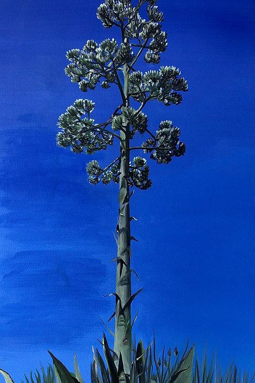 Malibu Yucca