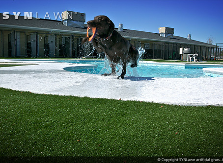 Pepper Pike Trusts SYNLawn of Northeast Ohio for Low-Maintenance Pet-Friendly Grass Alternatives