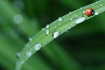 raindrops-574971_1920.jpg