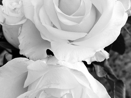 Wisdom of Black & White