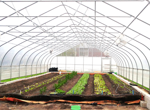 We Will Sell Growing Solutions Farm Produce in 2020