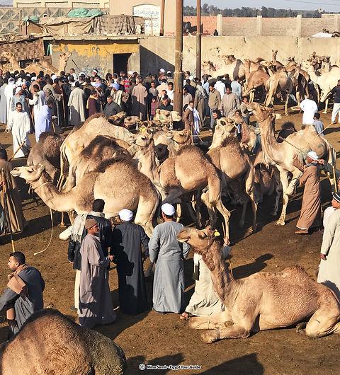 camel market 3.jpg